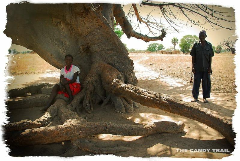 people shady baobab tree ghana