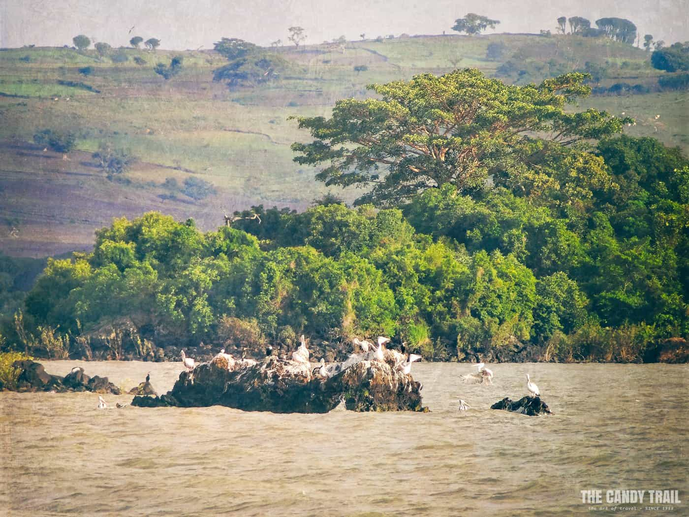 birds-on-rock-lake-tana-ethiopia