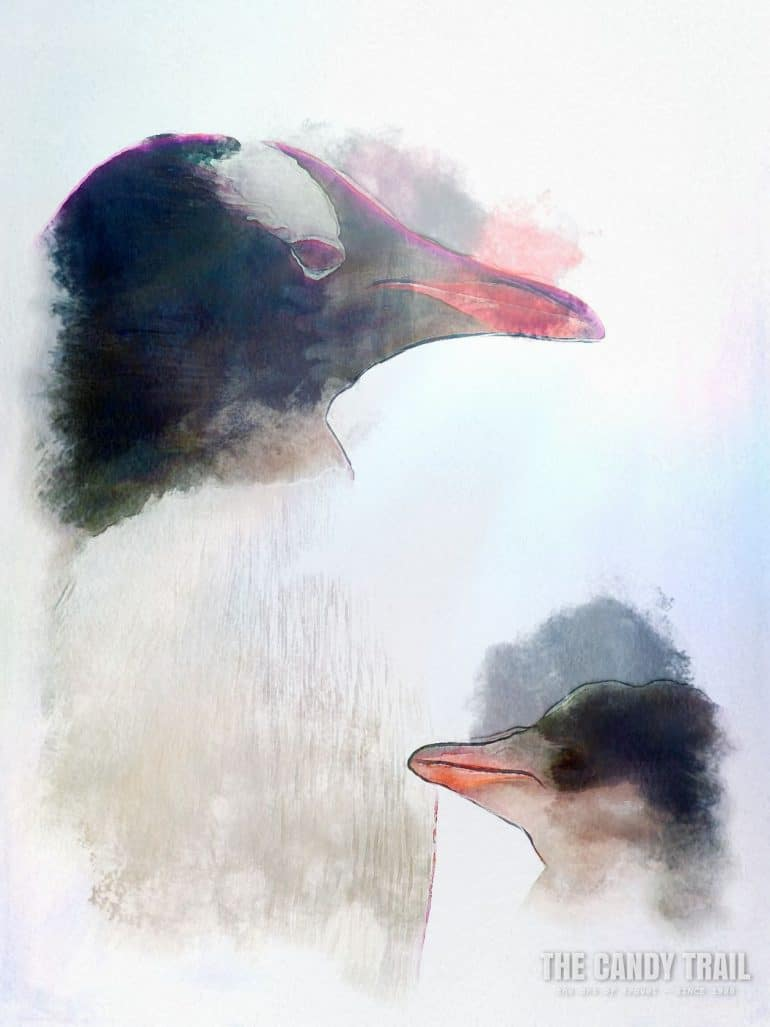 antarctica-penguin-mother-with-child
