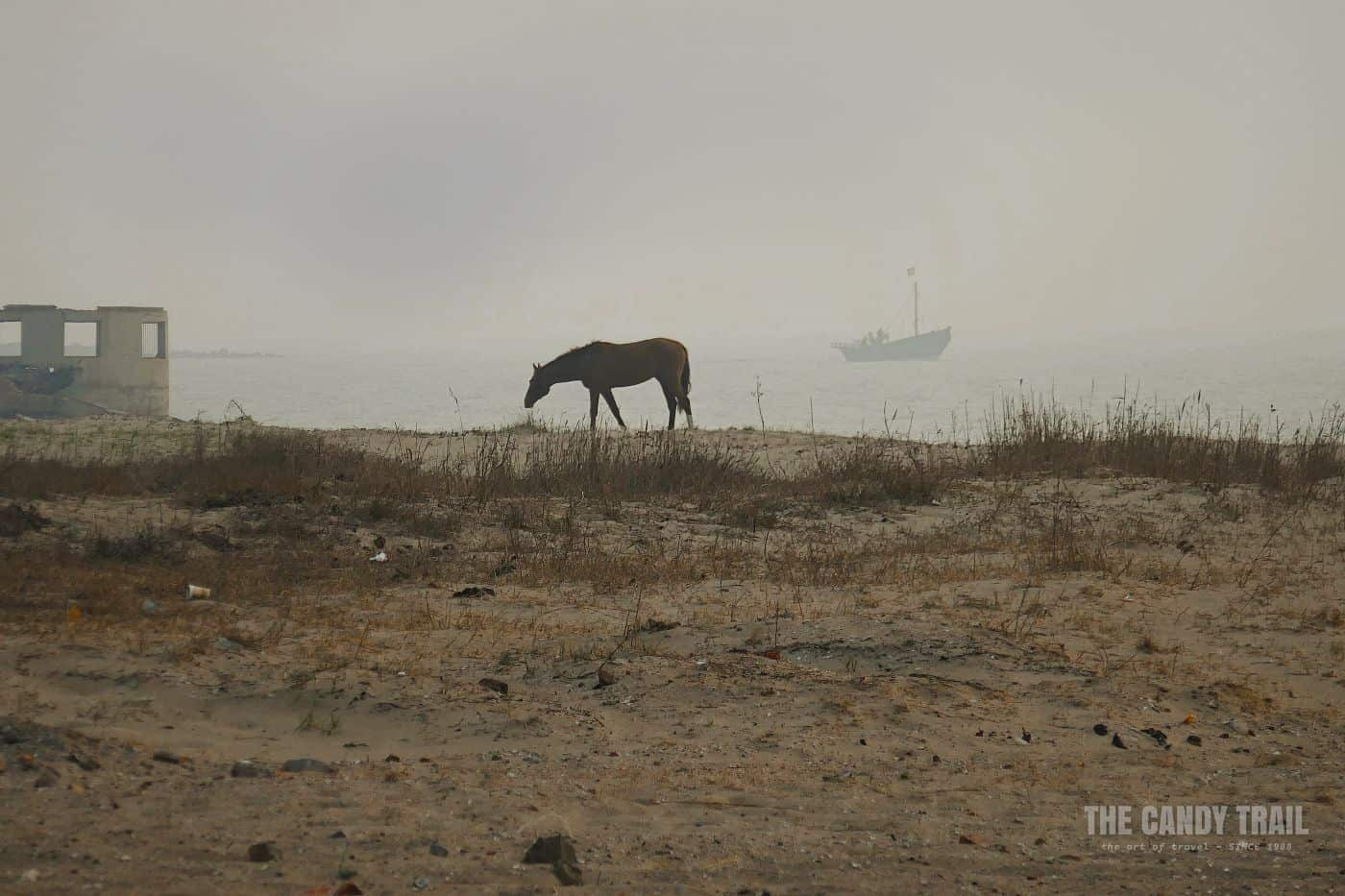 Horse Ruins Boat Beach Dawn In China