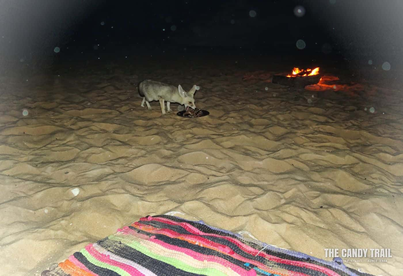 desert fox at camp fire egypt