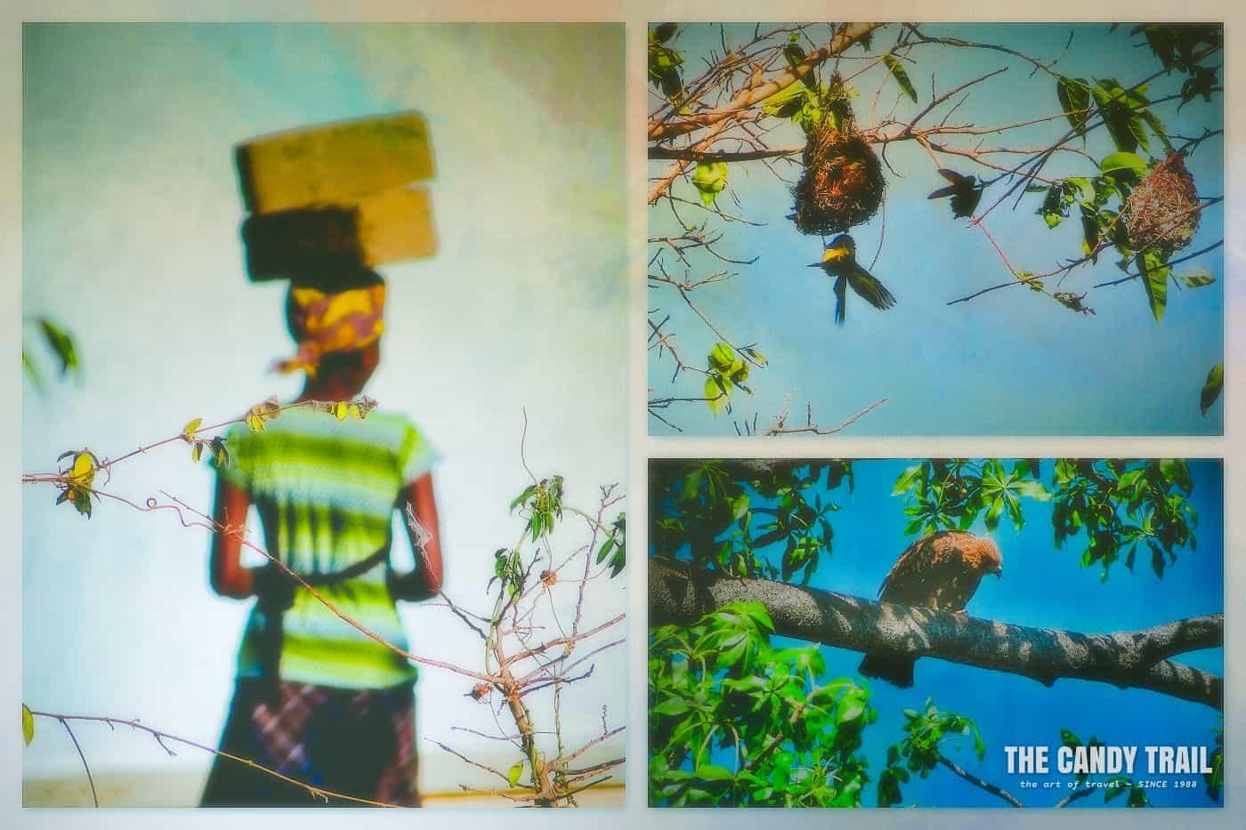 birds-lakoma-island-lake-malawi