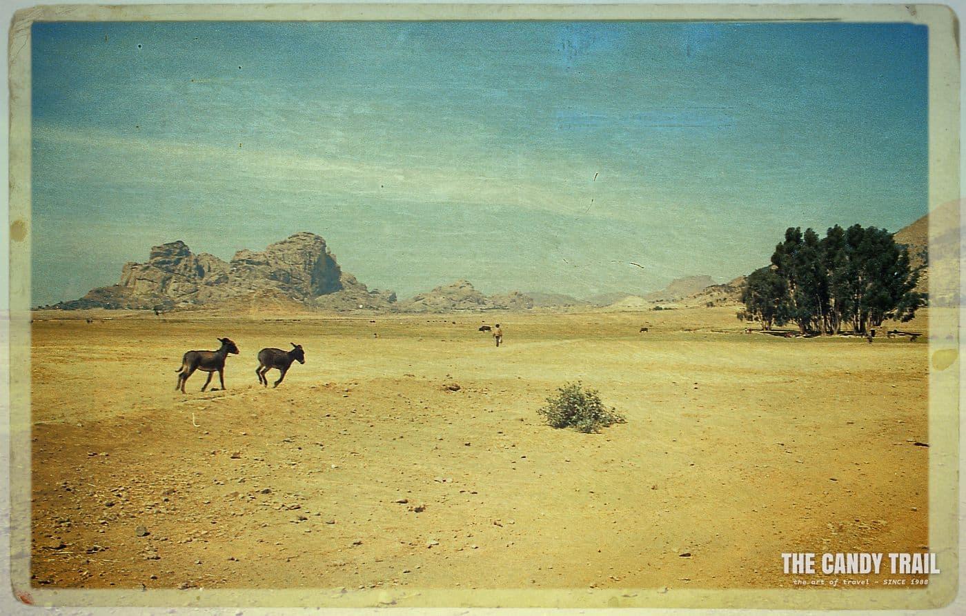 Donkeys running amid the landscape of Matara.