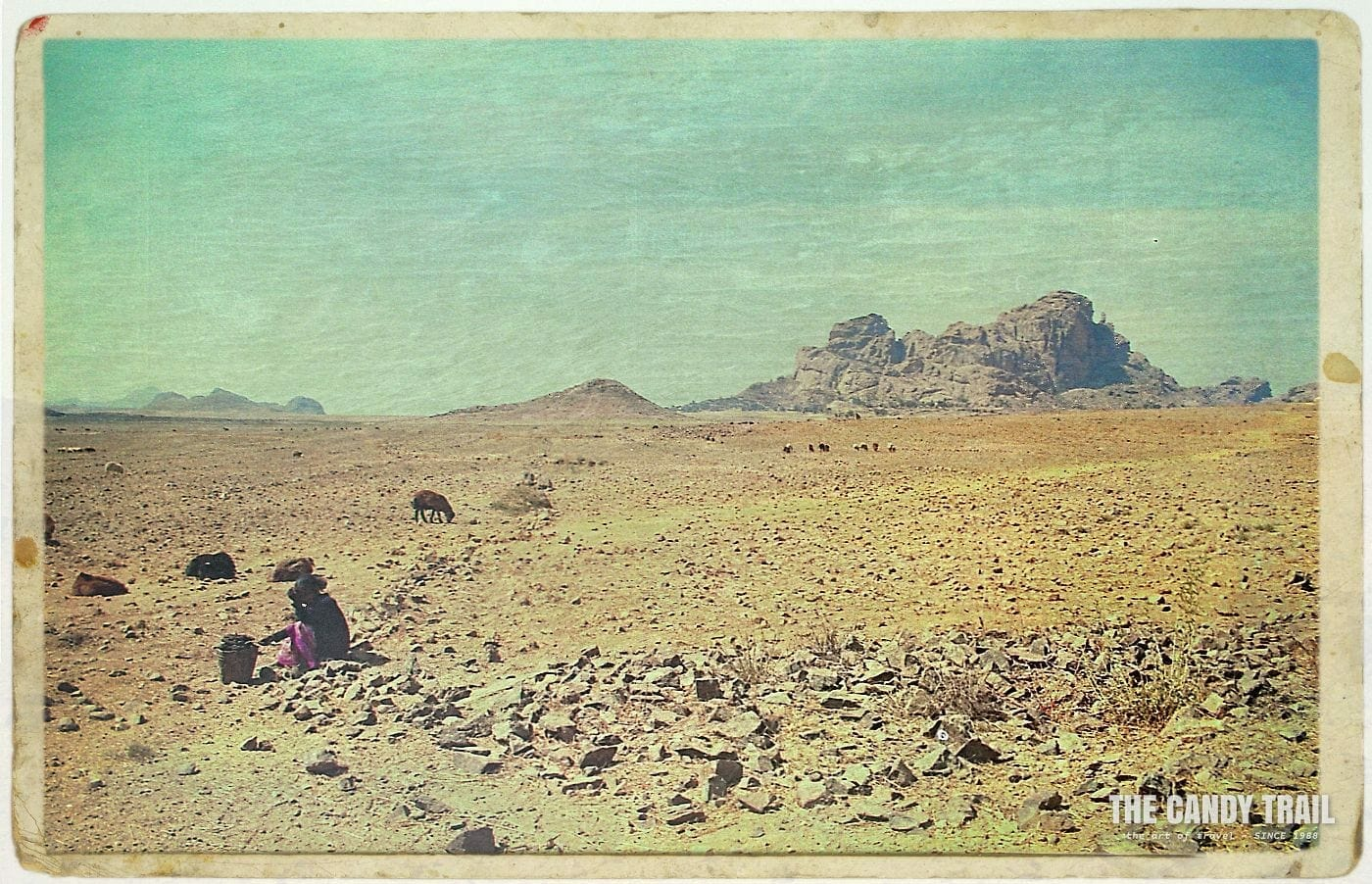 Shepard with flock in the arid surrounds of matara in southern Eritrea