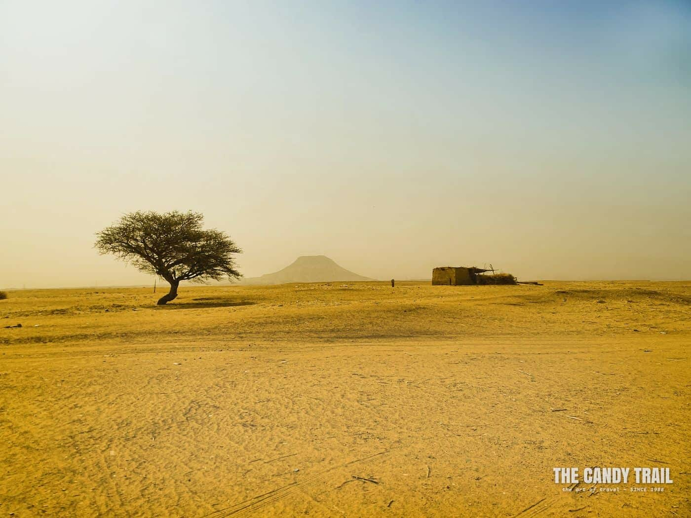 tree and hut in sahara desert sudan