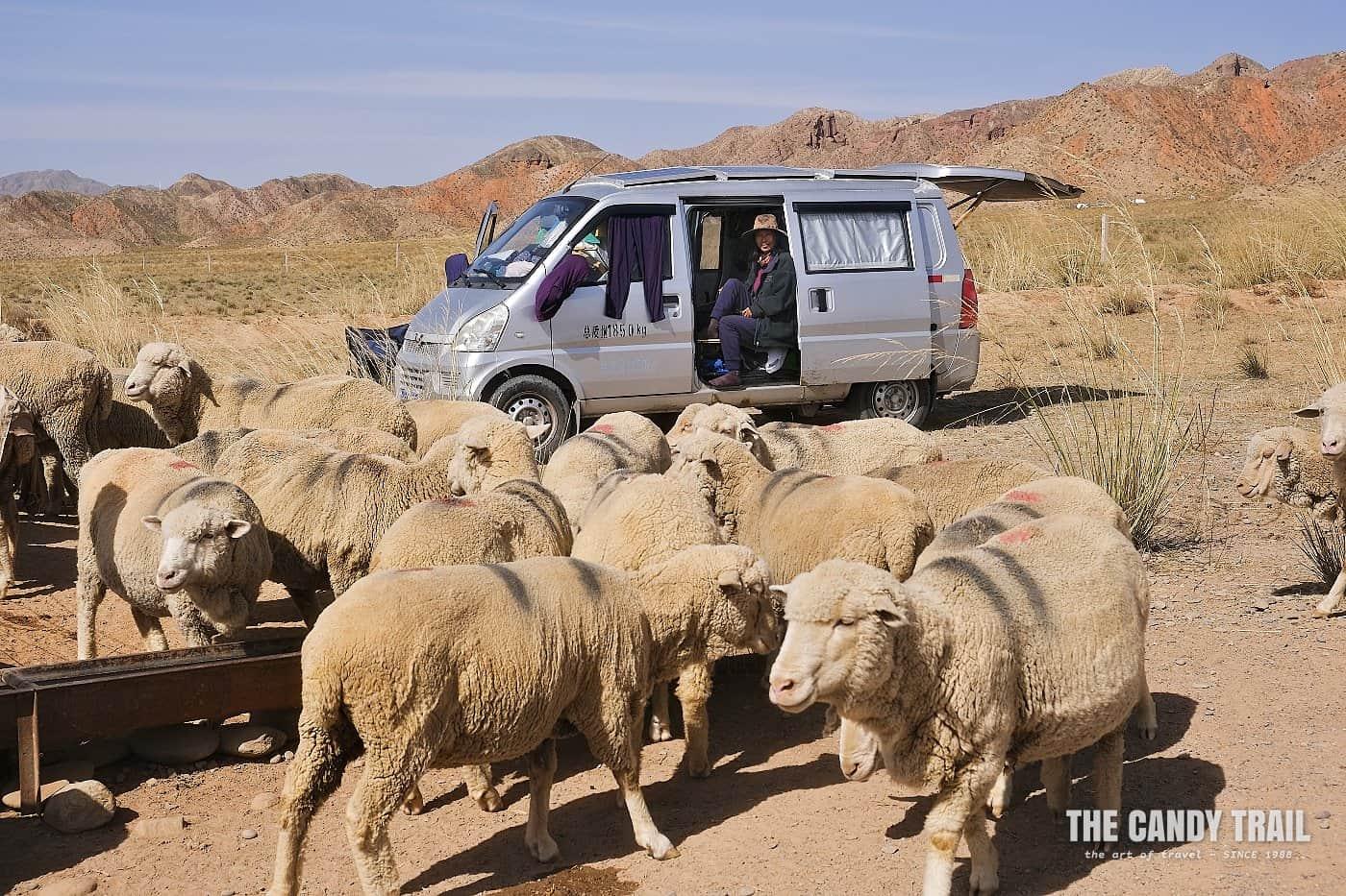 yugur nomads china 1