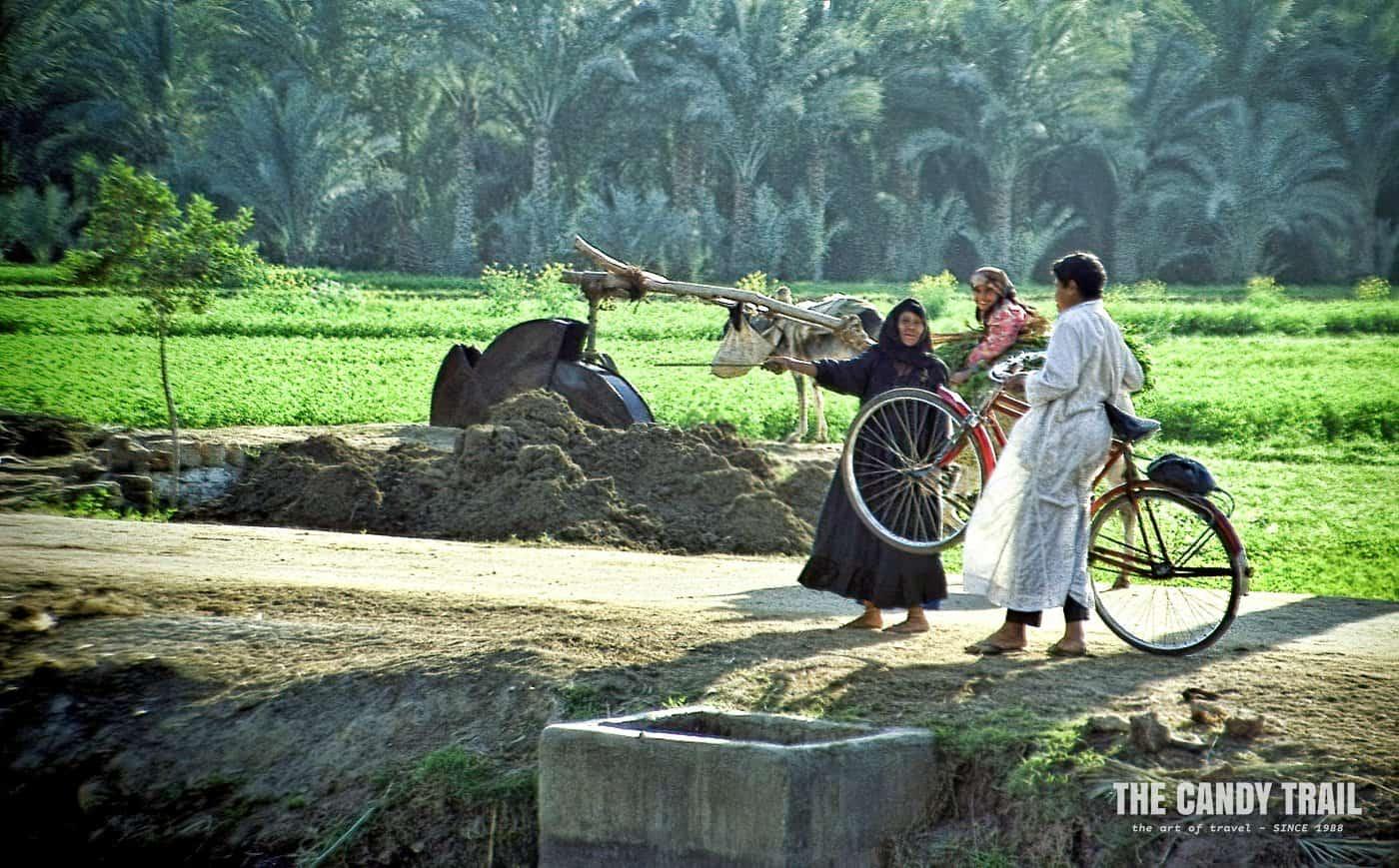 farmers in fields saqqarra egypt