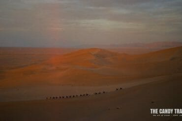 camels sand dune sunset silk road china