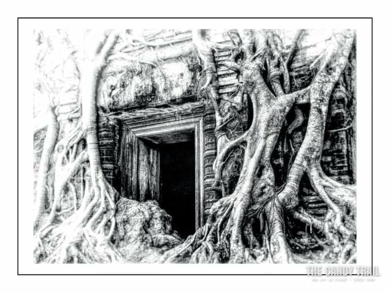 tree-strangled-temple-koh-ker-cambodia